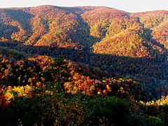 Fall colors at Mountain Bridge Wilderness Area.jpg