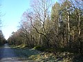 Farley Moor - Woodland Path - geograph.org.uk - 333462.jpg