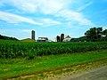 Farm with Three Silos - panoramio (14).jpg
