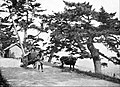 Farmers of forty centuries - conveyance used in Japan for the removal of city and village waste.jpg