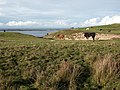 Farmland, Ardnave, Islay - geograph.org.uk - 273767.jpg