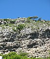 Feral Goats on the Orme above Gwalch Street - geograph.org.uk - 227667.jpg