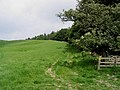 Field-woodland boundary - geograph.org.uk - 461398.jpg