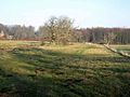 Field and trees near Gallowhill Hall - geograph.org.uk - 685213.jpg