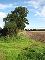 Field boundary hedge - geograph.org.uk - 989935.jpg
