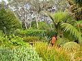 Flickr - brewbooks - Birkenhead garden (3).jpg