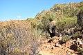 Flinders Ranges SA 5434, Australia - panoramio (28).jpg