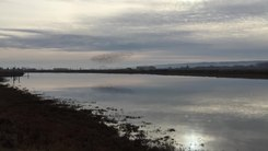 Податотека:Flock of birds near Padilla Bay.webm