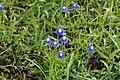 Flora 7426.jpg