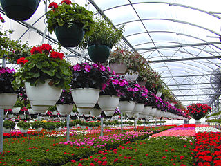 Floriculture discipline of horticulture concerned with the cultivation of flowering and ornamental plants