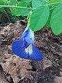 Flower1174.jpg