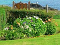 Flowerbed in a garden along the foreshore, Iona - geograph.org.uk - 983861.jpg
