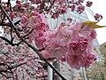 Flowers at Ebisu East Park.jpg