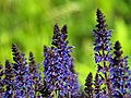 Flowers in Hot Spring State Park - panoramio.jpg