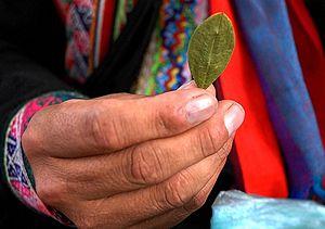 Português: Folha de coca, na Bolívia. English:...