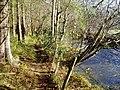 Footpath along the River Ystrad - geograph.org.uk - 287865.jpg
