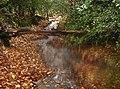 Footpath or stream^ - geograph.org.uk - 625743.jpg