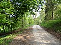 Footpath through Chedworth Woods - geograph.org.uk - 447713.jpg