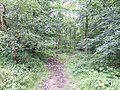Footpath through Fasting's Coppice - geograph.org.uk - 510532.jpg