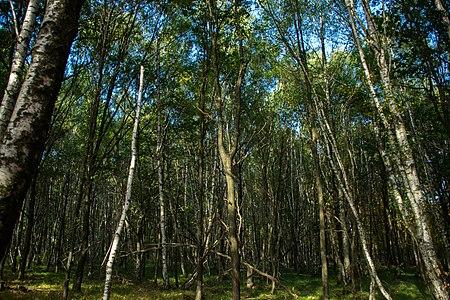Forêt de Rambouillet — automne 2018 (7).jpg