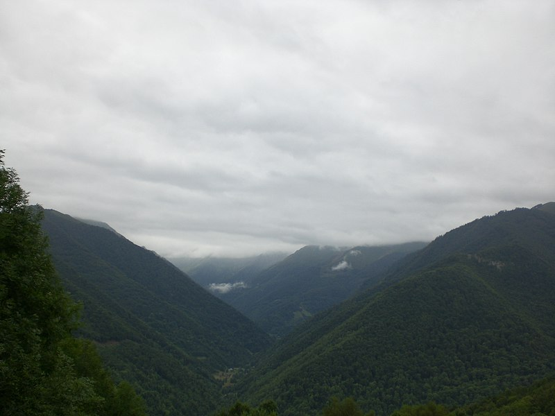 Forêt domaniale de Bordes des d'Uchentein (agost 2008)