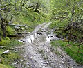 Ford across a tributary of the Glenstockdale Burn - geograph.org.uk - 447533.jpg