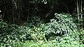 Forest @ Pambadum Shola NP - panoramio.jpg
