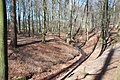 Forest Mariendaal with seeping water streamvalley at Oosterbeek - panoramio.jpg