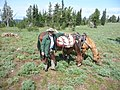 Forest Service Horse Packer, Wallowa-Whitman National Forest (26800785235).jpg