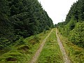 Forest Track, Mid Rig - geograph.org.uk - 467154.jpg