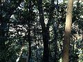 Forest in Kashima Shrine.jpg