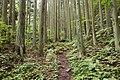 Forest in Mt.Futatsuya 01.jpg
