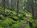 Forest on Baxter Creek Trail in Great Smoky Mountains National Park.jpg