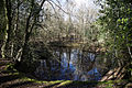 Forest pond at Gernon Bushes Nature Reserve, Coopersale Essex England 1.jpg