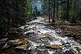 Forest stream water (Unsplash).jpg