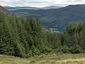 Forestry above Glen Lyon - geograph.org.uk - 216405.jpg