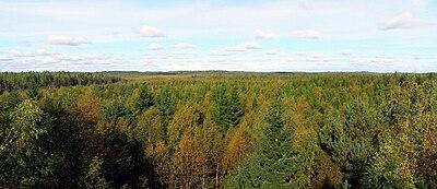 Forests around Soodla River, Sept 2009.jpg