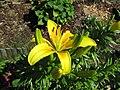 Fotky květů (57).jpg