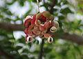 Fruit Im IMG 2705.jpg