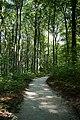 Fußweg Felsengarten Sanspareil 04082019 014.jpg