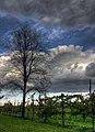 GRAPEVINE - Fellegara, Scandiano (RE), Italy - October 18, 2009 - panoramio.jpg