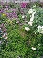 Garden's 13.jpg