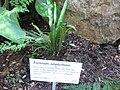 Gardenology.org-IMG 0791 rbgs10dec.jpg