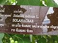 Gardenology.org-IMG 7656 qsbg11mar.jpg