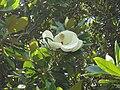 Gardenology.org-IMG 9885 rbgm10dec.jpg