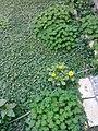 Gardens in Baghdad 16.jpg
