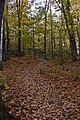 Gatineau Park, October 2018 (9) (44417694385).jpg