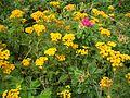 Gelbe Blumen.jpg