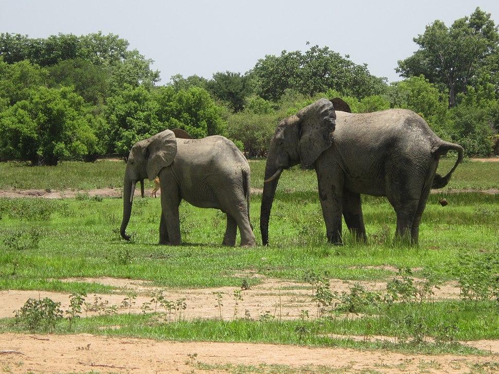 Ghanaian wildlife