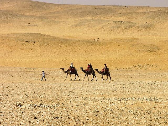 Giza - karawana wielbłądów